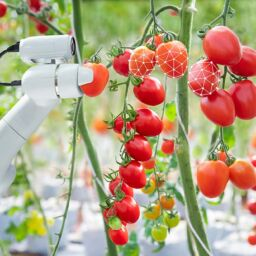 Tackling the Challenges of Greenhouse Robotics